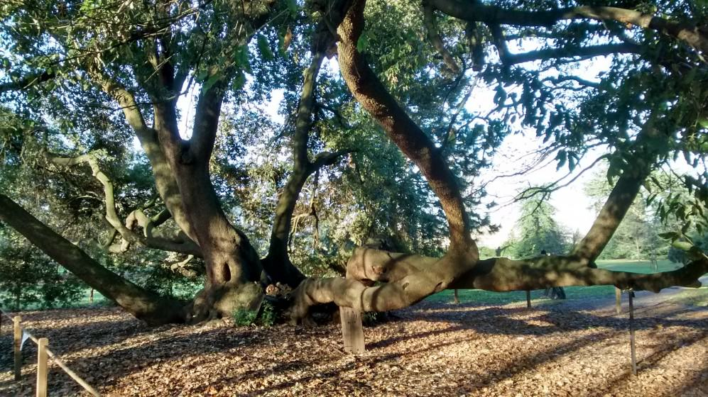 11) Credit London Trees