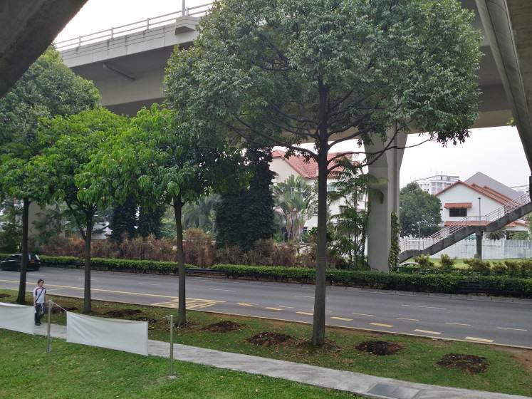 8) Multi-species avenue in Singapore