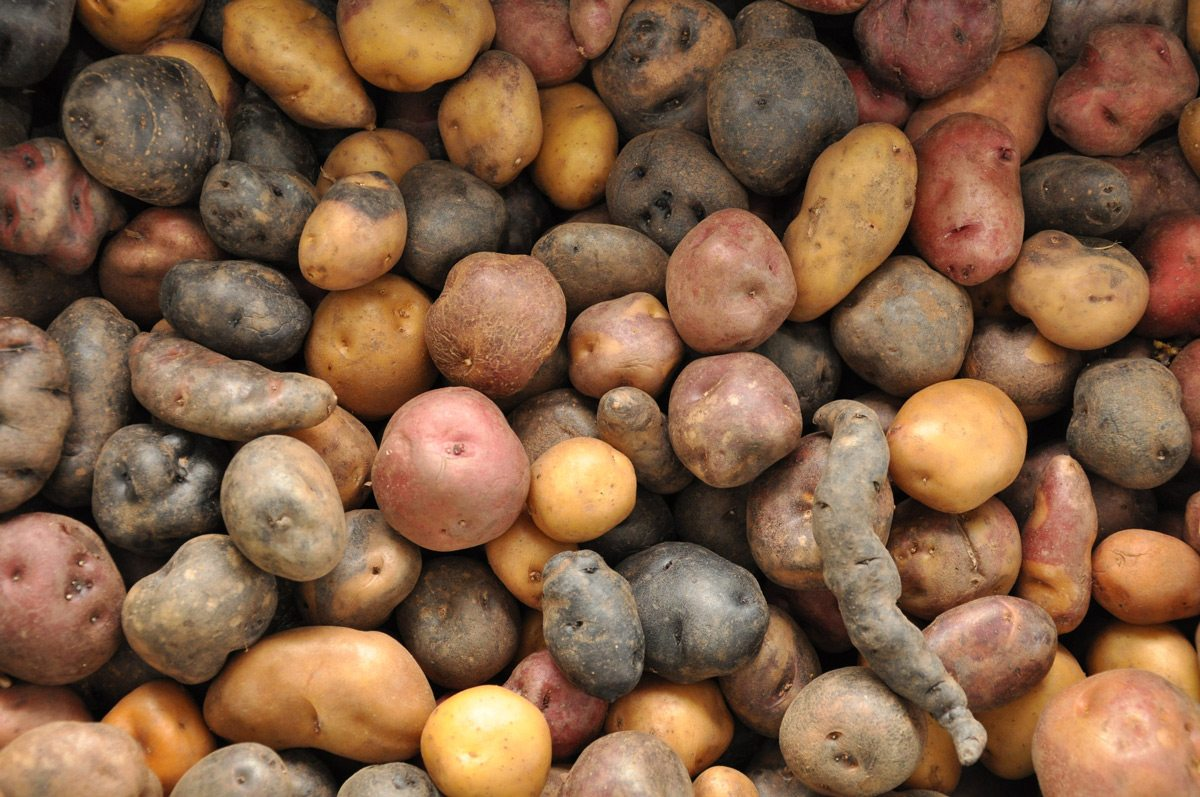 What Is The Meaning Of A Potato Cuisine As Language For Biocultural Connectivity The Nature