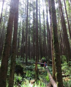 A figure in forestry gear stands in the lower right corner of the picture looking up at tall trees that surround them