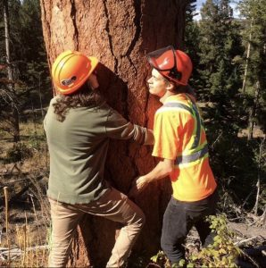 Two foresters hugging a tree