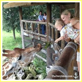 Feeding the giraffes at the Jacksonville Zoo & Gardens