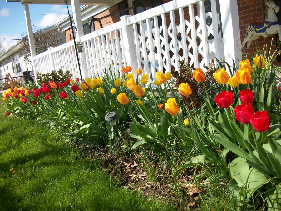 Help Wanted NB Gardens of the Month TheNBXpresscom