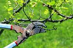 BG Tree Commission Holding Tree Care Seminar in April