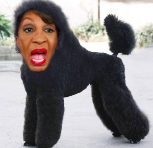 Maxine Waters is Trump's Bitch