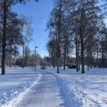 park during winter with snow and high trees