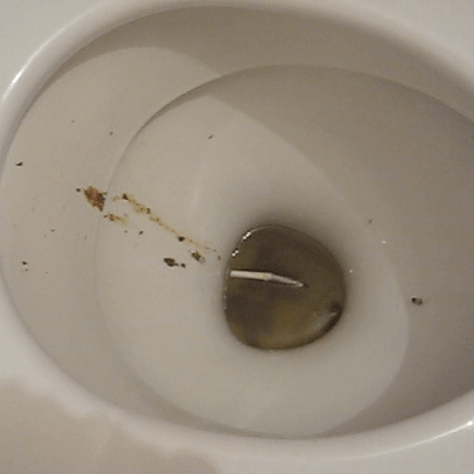 big girls poop in toilet