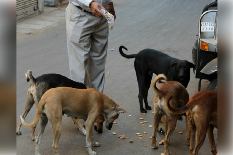 Is It Legal To Feed Stray Dogs B Luru Man Alleges