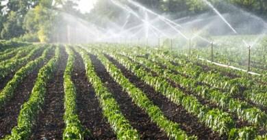 Irrigation Automation