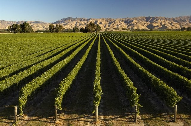 New Zealand agtech cluster: anatomy of a thriving industry tech hub