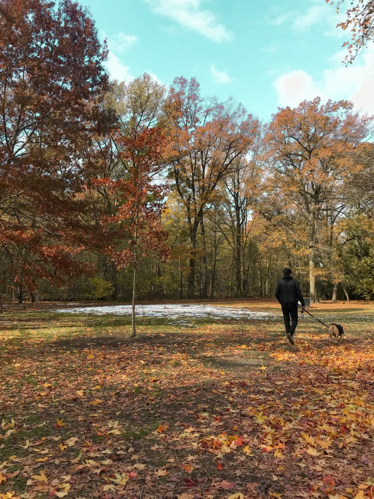 Fall in Prospect Park, walking dog