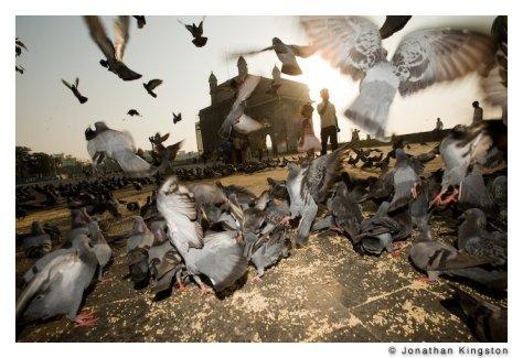 Pigeons, Gateway of India, Mumbai, India.