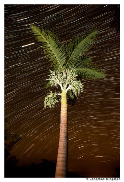 Night sky with star trails behind a Veitchi palm on Molokai.