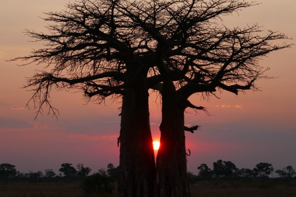 Sunset in the Okavango Delta - vegan guide