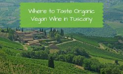 Where to Taste Organic Vegan Wine in Tuscany