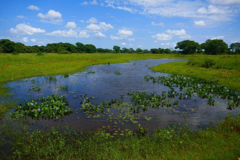 Pantanal tours of the wetlands