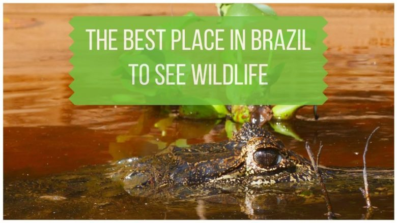The Pantanal - The Best Place in Brazil to See Wildlife