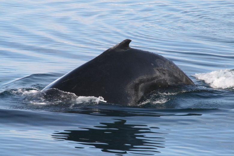 Humpback whale sightings were common on our Antarctica holidays