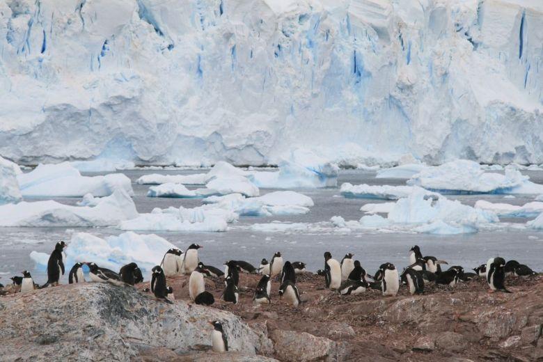 Penguins on Cuverville Island, Antarctica