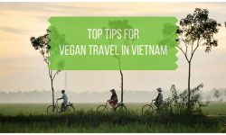 Vegan Vietnam Top Travel Tips