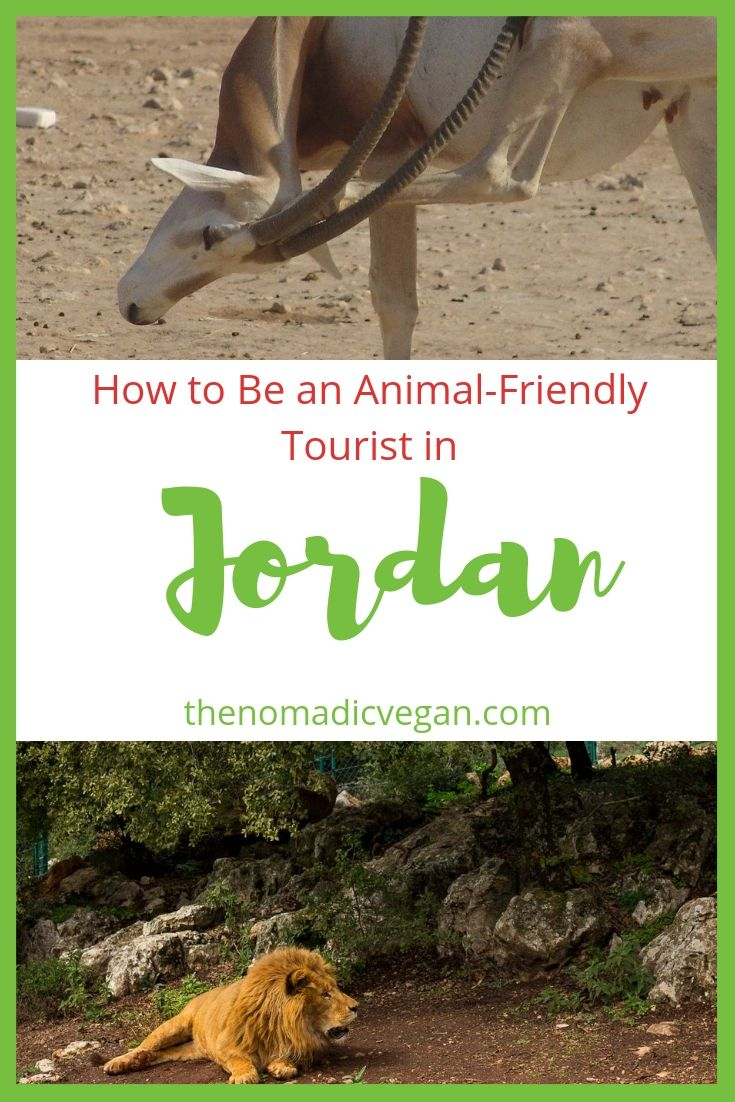 How to Be an Animal-Friendly Tourist When Visiting Jordan