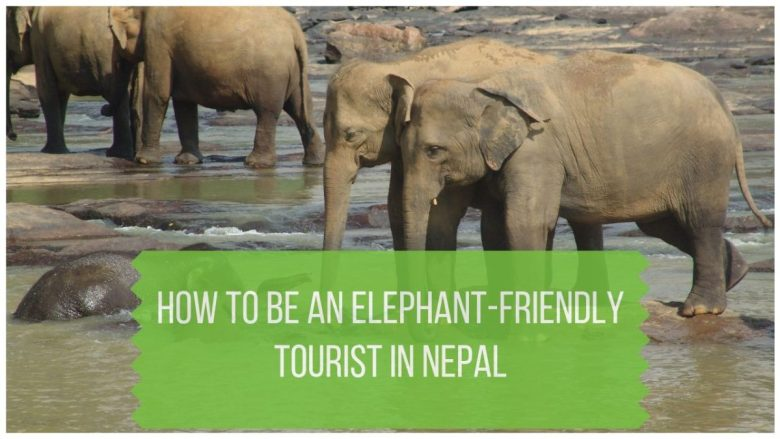 How to Be an Elephant-Friendly Tourist in Nepal