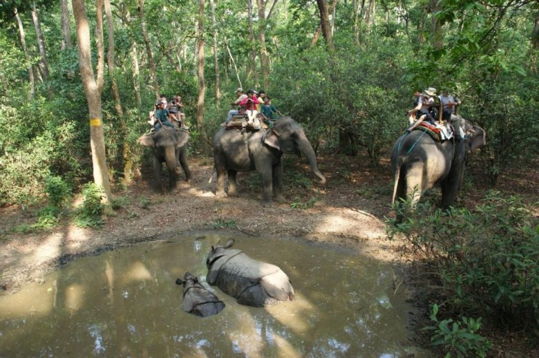 Seeing rhinos on elephant back