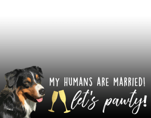 """""""I Do Too"""" - How I Included Da Pup in Our Wedding - The Nueva Latina"""