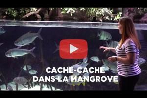 theo-cheval-video-2019-aquarium-biarritz-animation-mangrove