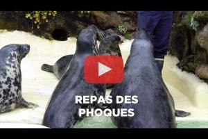 theo-cheval-video-2019-aquarium-biarritz-animation-repas-phoques