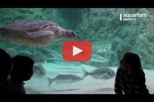 theo-cheval-video-2019-aquarium-biarritz-animations-longue