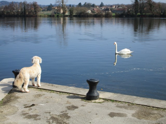 Annie thought the swans looked very interesting until one hissed at her!