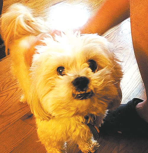 courtesy Carmen BarreiroOsito, the fatal victim of an alleged pit bull attack.