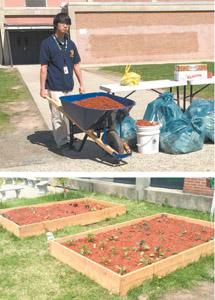Top photo courtesy Gary Klotzkin; bottom photo by Judith Worster BHS senior Ryuji Maramot readies soil for planting herbs in school's garden plots.