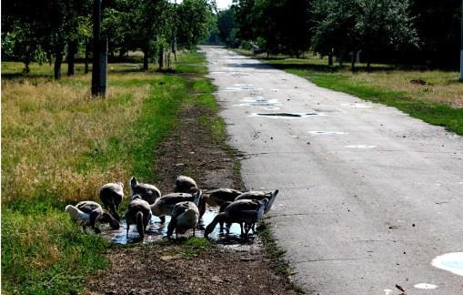 Roadside in Eastern Ukraine