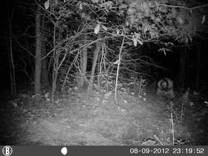 Creepiest Things Ever Captured on Trail Cameras