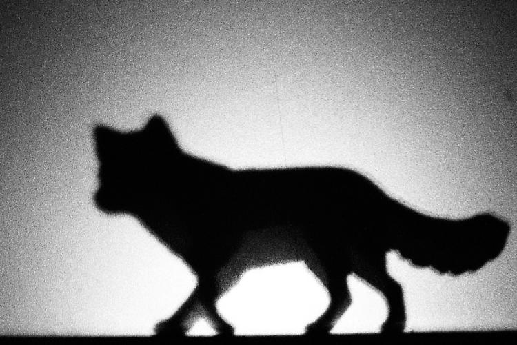 6 créatures mystérieuses qui utilisent des déguisements humains