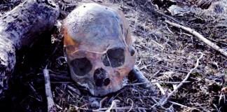 A Skull Staring Back: The Unsolved Murder of Linda Sherman