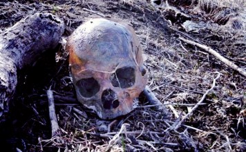 A Skull Staring Back: The Unsolved Murder of Linda Sherman