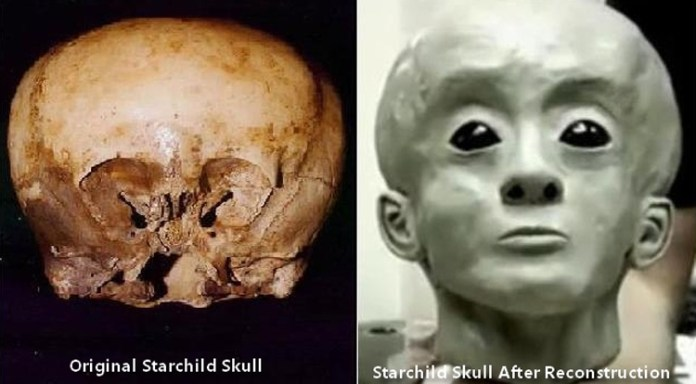 Unearthed: 4 of the Strangest Skulls Ever Discovered
