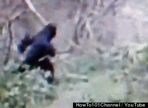 Bigfoot video from Grand River, Ohio