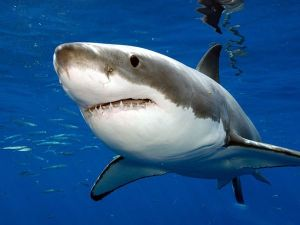 What was big enough to eat a great white shark?