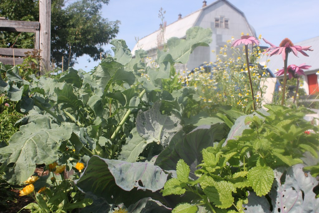 herb garden gone wrong