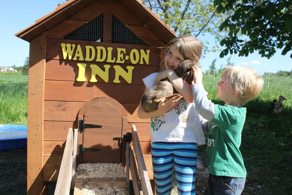 Raising ducks for eggs - The Old Walsh Farm