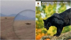 Helicopter and thermal cameras roped in to seek for black panther in sleepy village in Spain's Andalucia as 'first image' emerges – Espana news