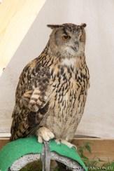 block06_owls4