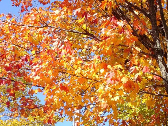 September-Tree © Etolane - https://www.flickr.com/photos/etolane/254817010