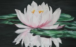Water Lily Oil Painting on Canvas