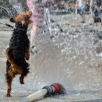 Tools: Sipping from the Internet Firehose