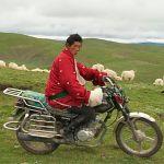 """Storygram: Jane Qiu's """"Trouble in Tibet"""""""